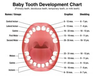http://zomko.facach.org/deciduous-teeth/